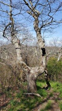 Slingshot Tree