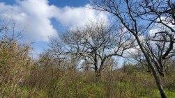 Treetops View