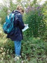 Vernonia gigantea or V. noveboracensis?